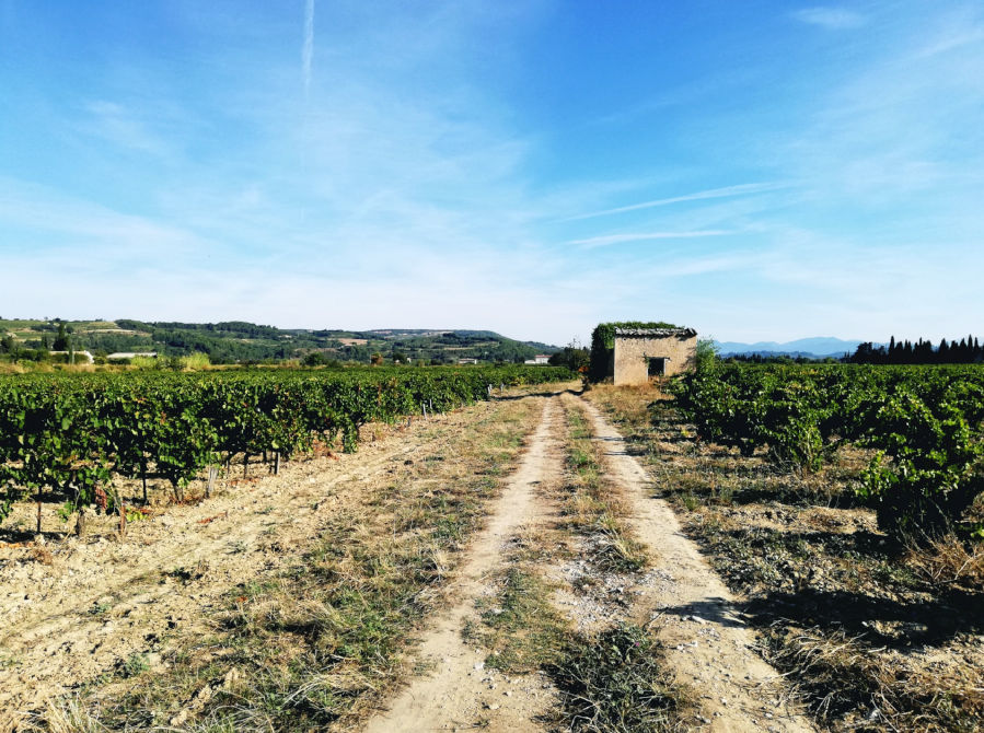 Vignes Séguret Côtes du Rhône AB