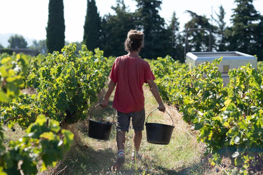 Vendangeur Séguret Côtes du Rhône